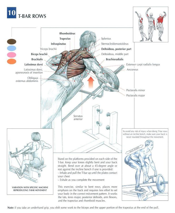 T-Bar Rows ♦ #health #fitness #exercises #diagrams #body #muscles #gym #bodybuilding #back