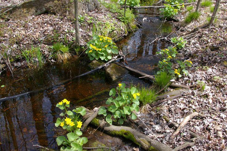 Regional Forest Tract - Marigold Marsh
