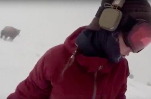 В Японии сноубордистка Келли Мерфи не заметила медведя у себя за спиной (видео)