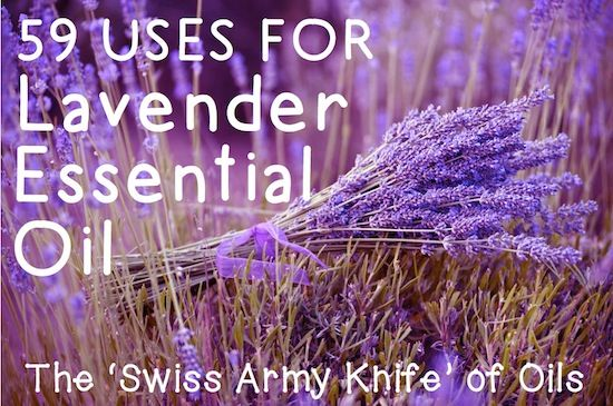With its amazing variety of uses, Lavender Essential Oil really is the 'Swiss Army Knife' of Essential Oils! ❤purasentials.com❤ essential oils with love