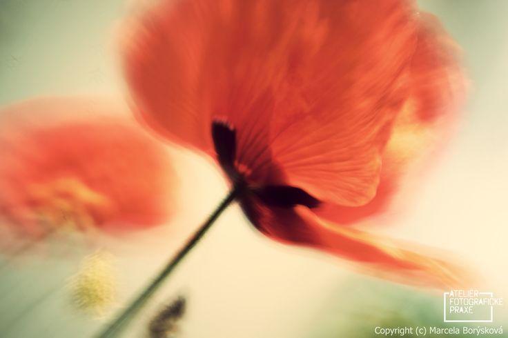 Fotografie z Kurzu práce s Lensbaby. http://afop.cz/fotograficke-kurzy/kategorie/kurz-prace-s-lensbaby-zima-v-praze/ #fotografovani #kurz #fotokurz #fotografickekurzy #canon #nikon #Lensbaby