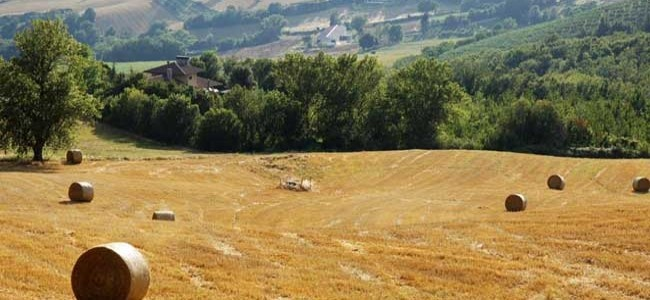 Fields of wheat after harvest in Umbria.  Contact Todiguide.com to book a tour in Umbria