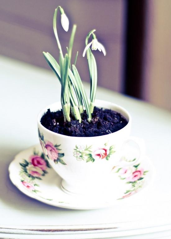 Zwiastun wiosny, przebiśnieg ;)