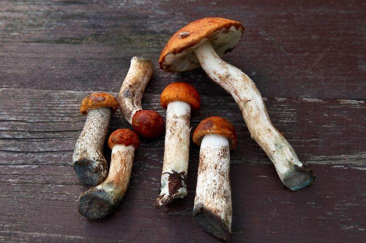 Грибы Подосиновики. #photomira #photoirinamaysova #Gribanovo #Russia #грибы #фотографиринамайсова #природа