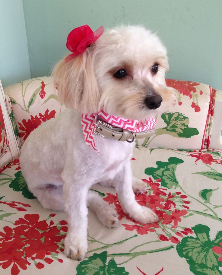 99 best dog grooming images on pinterest dog grooming business dog grooming designs looks just like my dog sugar solutioingenieria Choice Image