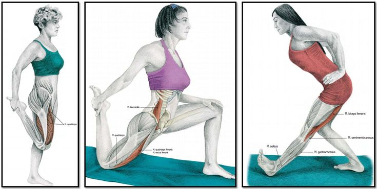 Мышечная группа ноги: квадрицепс (сгибание в колене, сгибание бедра с поддержкой колена) и бицепс бедра (разгибание бедра с вытянутым коленом).