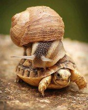 What did the snail say when he road on the back of the turtle?  Weeeeee!