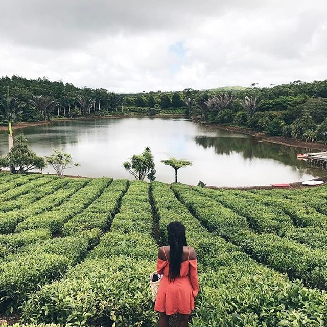 "• Champs de thé de Bois Chéri 🍃- Point de vue __ "" Perspective is the way we see things when we look at them from a certain distance and it allows us to appreciate their true value "" 