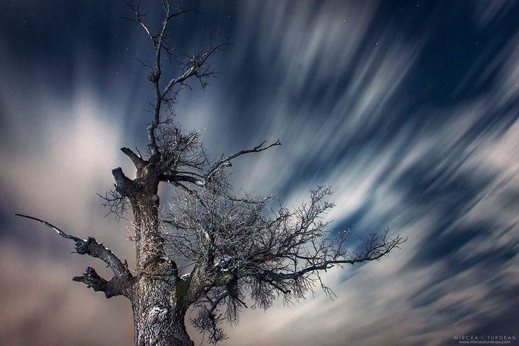 Transylvania tree III