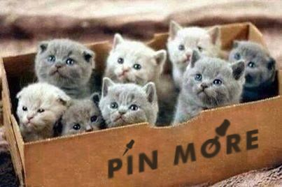 "You can never ""pin"" enough! No pin limits! Happy pinning ;-)"