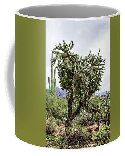 Coffee Mug featuring the photograph Desert Tree In Arizona by Evgeniya Lystsova. Desert Tree in Tonto National Forest at Arizona, USA. Coffee time, Kitchen, Gift, Home and Office products. For lovers of green. Our ceramic coffee mugs are available in two sizes: 11 oz. and 15 oz. Each mug is dishwasher and microwave safe. SHIPS WITHIN 1 -2 business days