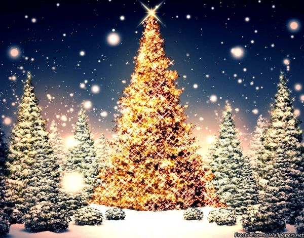 Blessed Christmas Trees Nature