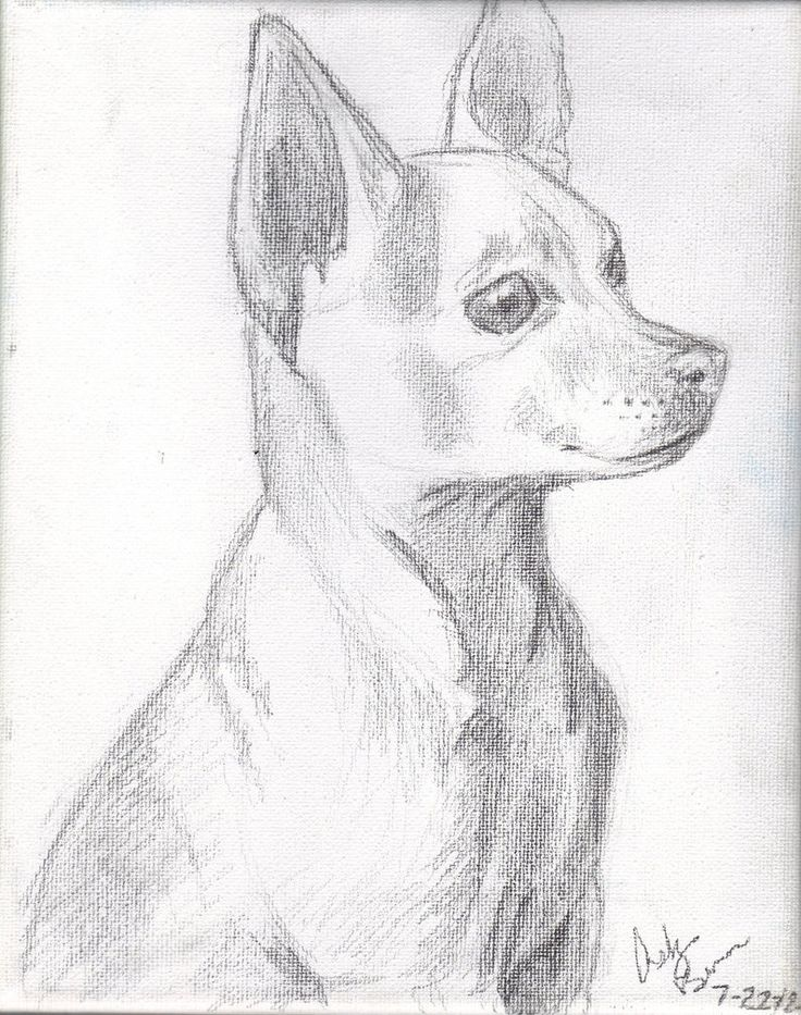 the  best chihuahua drawing ideas on pinterest
