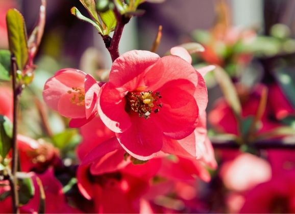 HOW TO SPRING CLEAN THE YARD  To prepare the yard and have it ready for summer, follow these steps from Victa, the Australian garden expert, to help revive the lawn from its winter slumber and bring it back to life this spring.