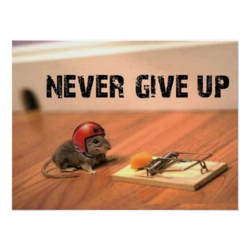 Most Inspirational Quotes About Not Giving Up: Never Give Up Mouse Poster