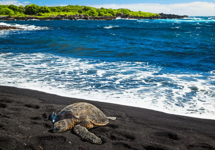 Punaluu, en Hawaii - GETTY IMAGES