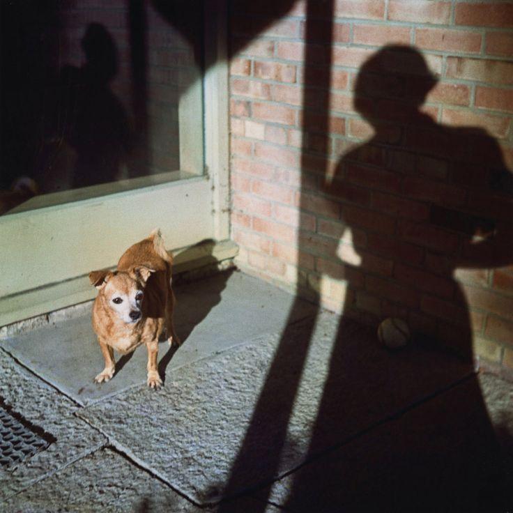 Vivian Maier  -  Self Portrait, no date, Chicago (dog) / Chromogenic Print  -  12 x 12 (on 16x20 paper)