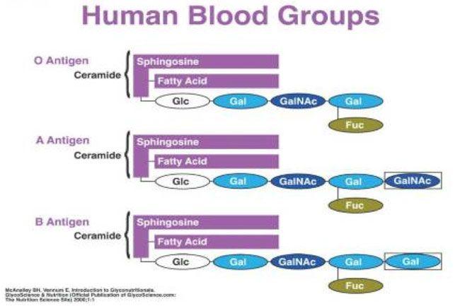 Verschillende bloedgroepen