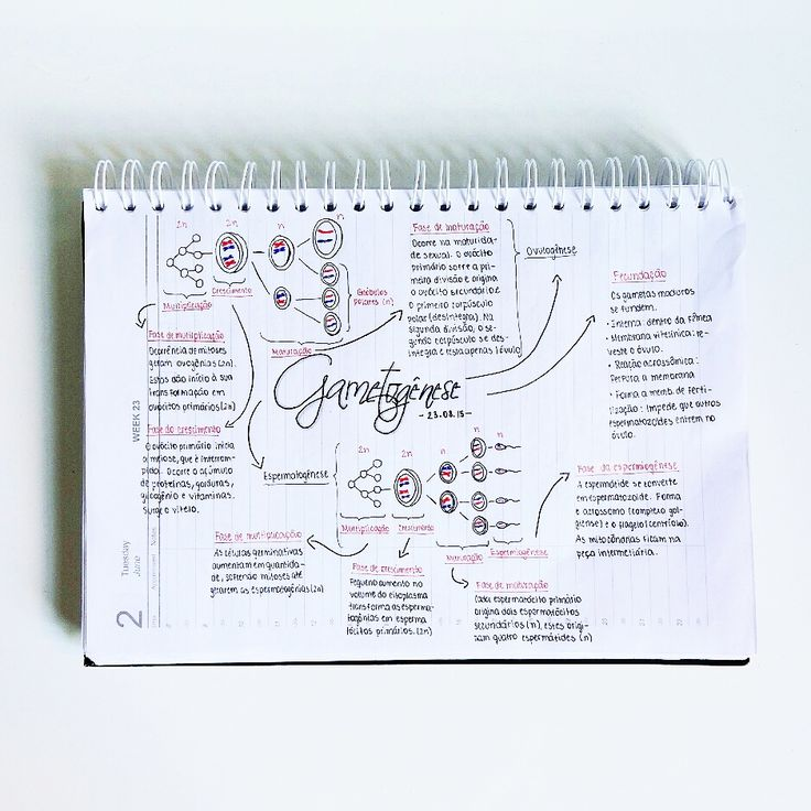"""intelectum: """" 04:10 PM // Hello! I made these mind maps a few days ago. I'm really proud of them considering I never made one before. """""""