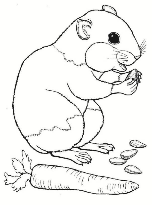 Hamster Ausmalbilder Ausmalbilder Hamster Malvorlagen Tiere Ausmalbilder Ausmalen