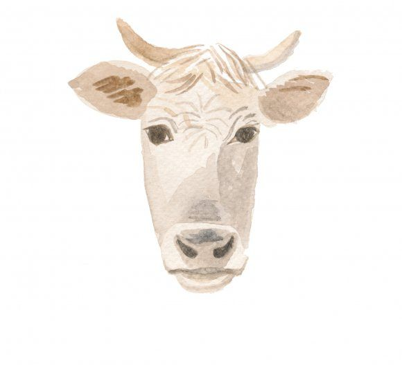 Happy, healthy cows produce the best milk. It's a difference we hope you'll be able to taste.