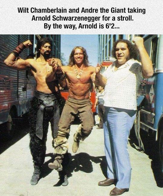 Arnold Looks So Tiny #lol #haha #funny