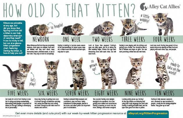How Old Is That Kitten Kittenprogressionguide At A Glance Kittens Are Adorable At Any Age But Did You Know Kitten Season Alley Cat Allies Newborn Kittens