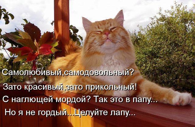 Картинки смешные стихи про котиков, коробочки свадьбу