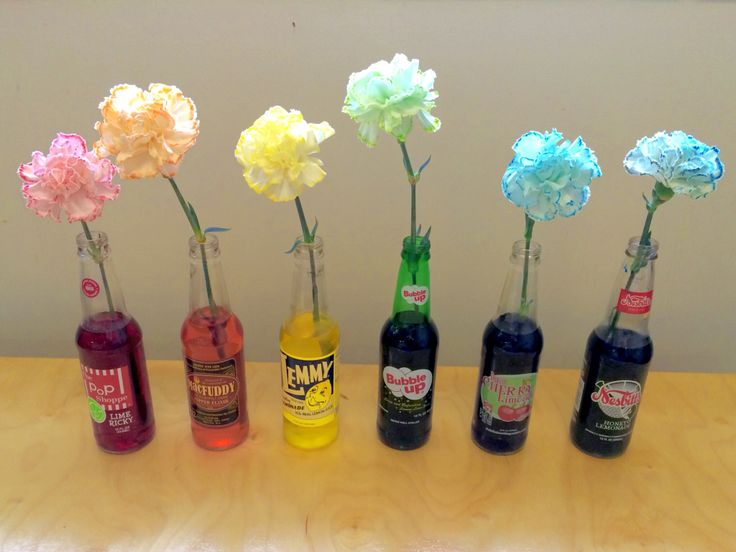 Botany. Changing the color of Carnations. A beautiful and fun experiment with food coloring. The old fashioned soda bottles are cute too!