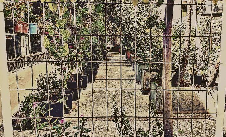 #garden #green #thessaloniki #city #instagram #instago #gregfrag #