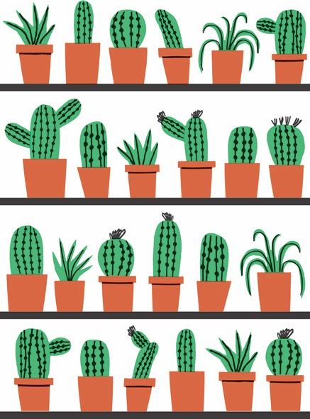 Marcus Oakley - Cacti