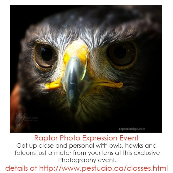 Join Photo Express and Raptor's Ridge for this exclusive Photography event. Bring lots of memory space for the amazing photographs you will take. Register now as space is limited!