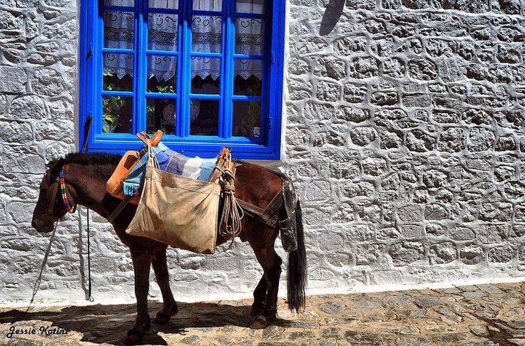 Donkey for Transport | by Jessie Kotini