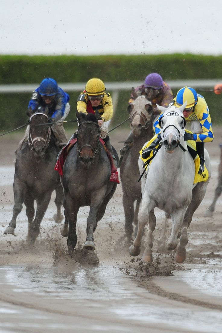 53 best horse racing videos images on pinterest horse racing gulfstream park live racing falaconquin