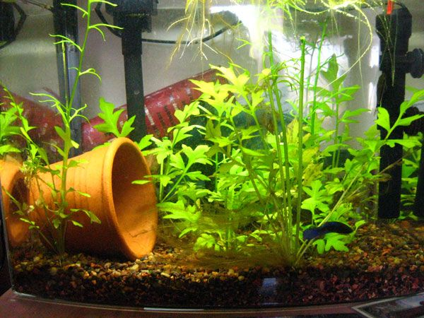 Betta Fish Tank Setup Ideas For Your Pet Fish That Make A Statement And  Adds To