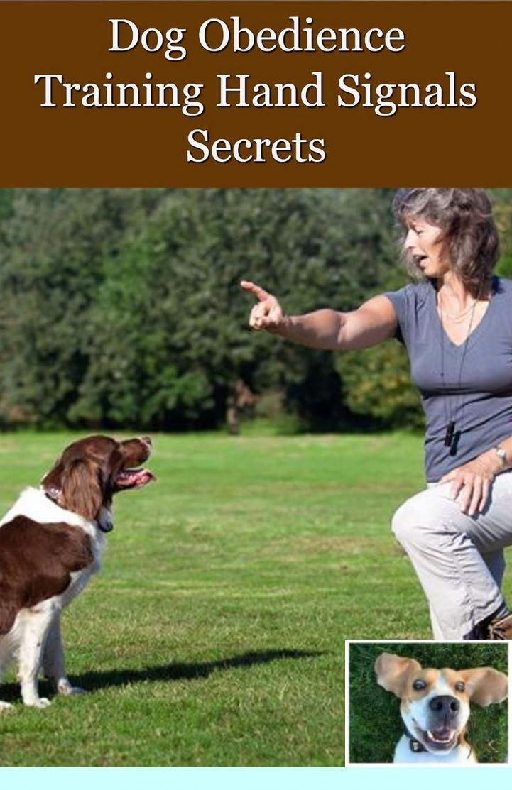 1 Dog Obedience Training Missoula Mt And Dog Tricks In French