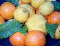 Vitamine C ou Acide Ascorbique