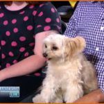 Susan Sarandons' Dogs Are Tweeting? (Video)  Watch the video below as Susan Sarandon is being interviewed abou ..  http://www.dogisto.com/susan-sarandons-dogs-tweeting/