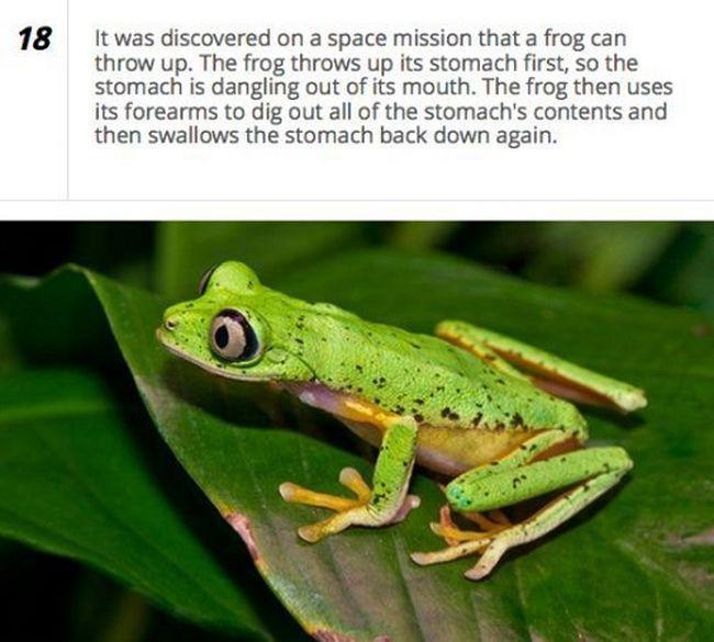 25 Amazing Facts - 18