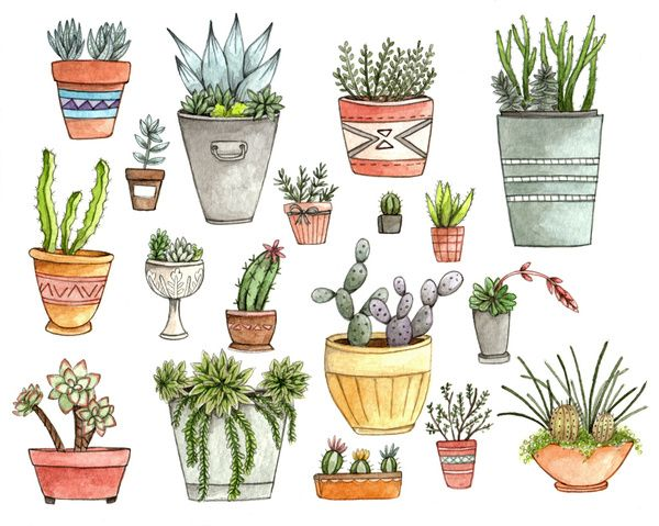 Potted Succulents by Brooke Weeber