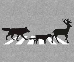 17 Best images about Moony, Wormtail, Padfoot, and Prongs ...