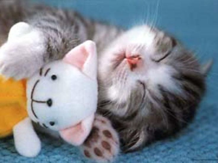 soft kitty, warm kitty  little ball of fur  happy kitty, sleepy kitty  purr, purr, purr