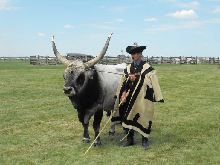 Hungary - A love for life! | III. Hungarian Grey Cattle Festival