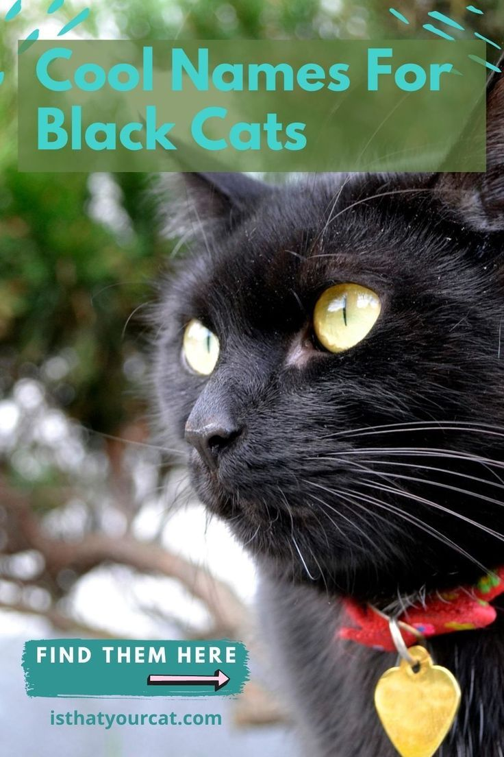 Unique Black Cat Names For Your Special Kitty In 2020 Names For Black Cats Cat Names Black Cat