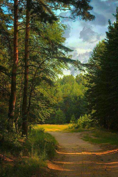 Road in the forest [location and photographer unknown]