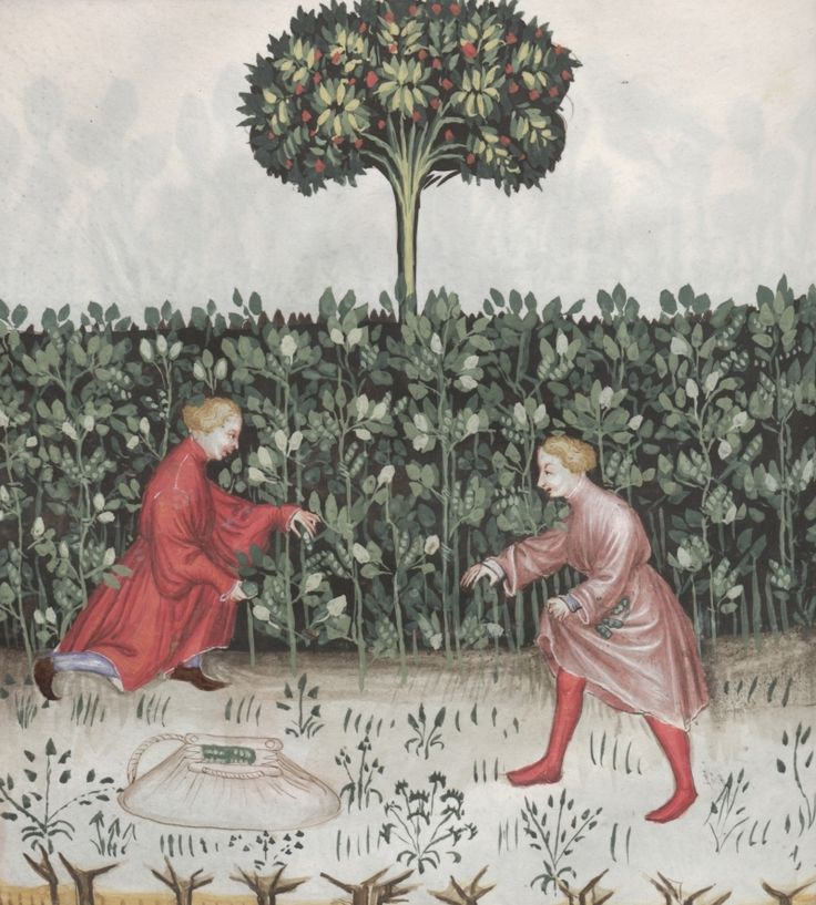 Two boys picking broad beans - Faba | Österreichische Nationalbibliothek - Austrian National Library | Public Domain