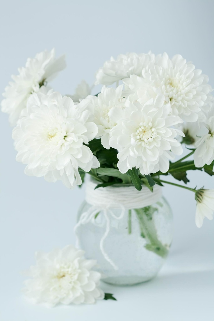 The 21 best white chrysanthemum images on pinterest white white chrysanthemums mightylinksfo