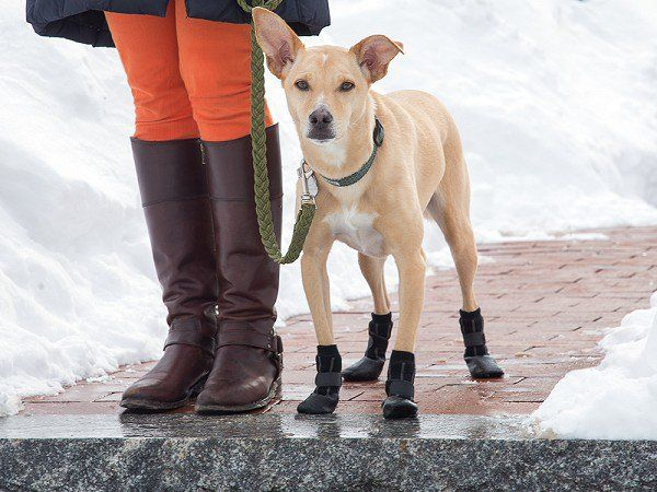 Protect your pup's paws on every winter walk. These water-resistant booties have a snug fit, nonslip soles, and a stylish edge.