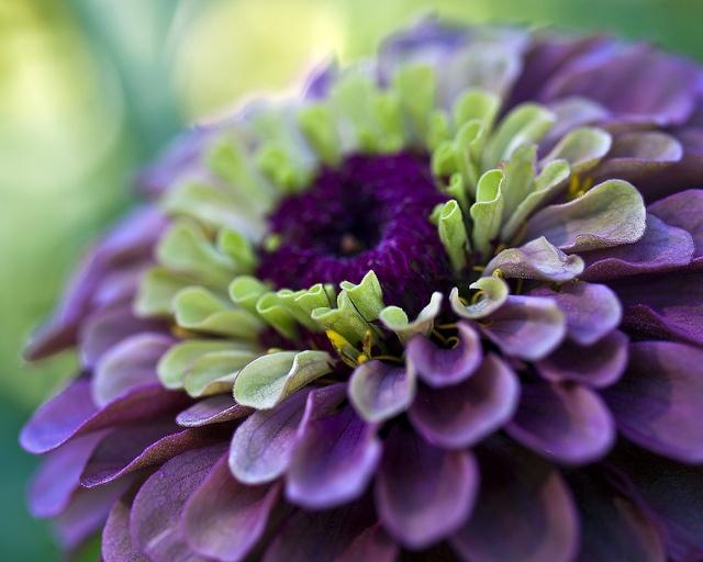 Purple & Green. WOW.