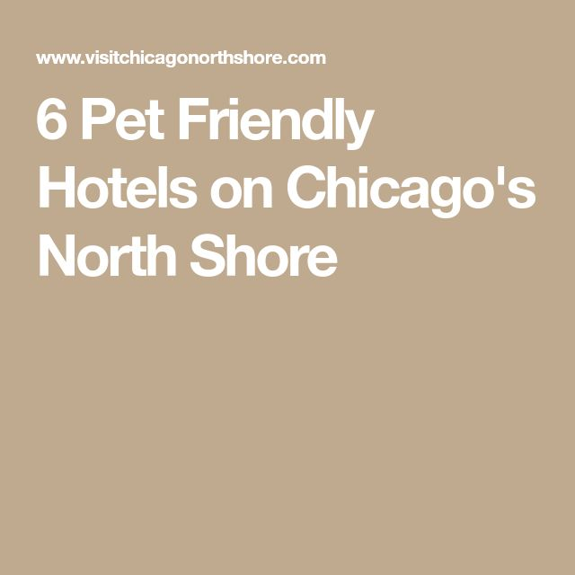 6 Pet Friendly Hotels on Chicago's North Shore